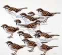March of the sparrows
